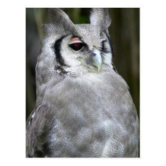 Cartão Postal A Eagle-Coruja de Verreaux (bubão Lacteus),