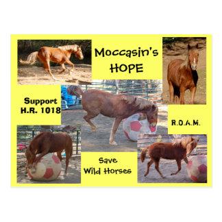 Cartão Postal A ESPERANÇA do mocassim - salvar cavalos selvagens