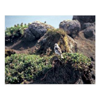 Cartão Postal A estamenha de McKay na ilha de Salão