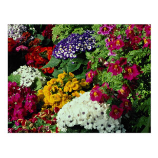Cartão Postal A exposição floral em Niagara estaciona a estufa,