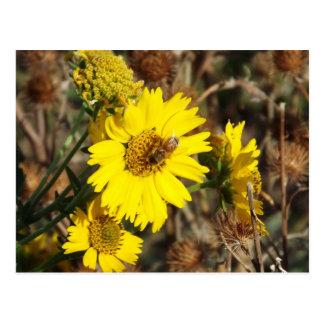 Cartão Postal A flor e a abelha