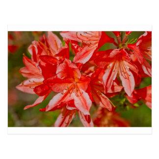 Cartão Postal A flor selvagem vermelha