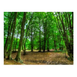 Cartão Postal A floresta antiga