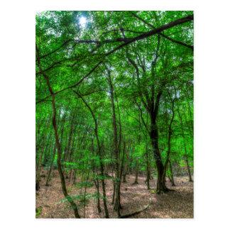Cartão Postal A floresta inglesa antiga