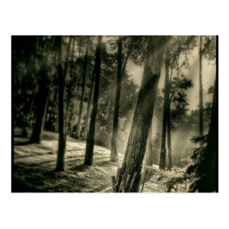 Cartão Postal A floresta preto e branco legal Sun irradia