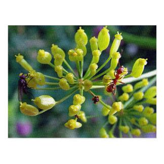 Cartão Postal A formiga, a mosca, e a erva daninha