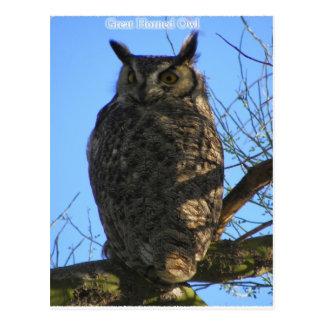 Cartão Postal A grande coruja Horned