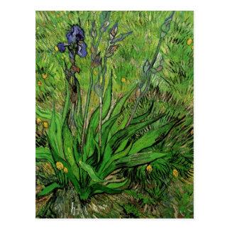 Cartão Postal A íris por Vincent van Gogh