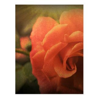 Cartão Postal A laranja aumentou
