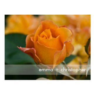 Cartão Postal A laranja aumentou DSC3450