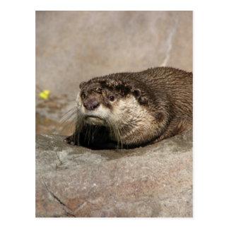 Cartão Postal A lontra de Helaine