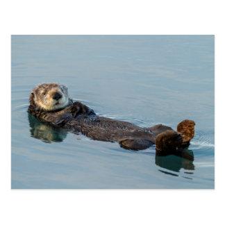 Cartão Postal A lontra de mar que flutua sobre suporta no oceano