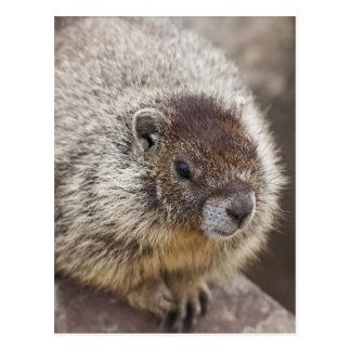 Cartão Postal A marmota em Palouse cai parque estadual