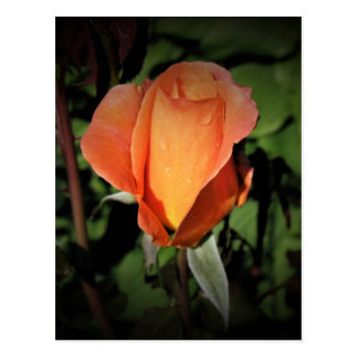 Cartão Postal A miçanga da água na laranja aumentou