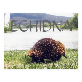 Cartão Postal A natureza animal do ECHIDNA personaliza
