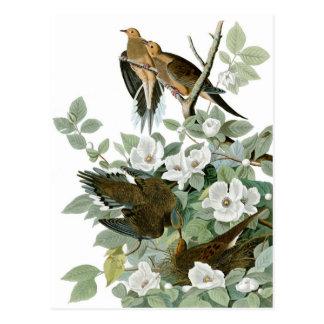 Cartão Postal A pomba de lamentação de Audubon