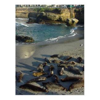 Cartão Postal A praia da angra de La Jolla acena selos de areia