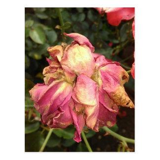 Cartão Postal A secagem cor-de-rosa aumentou