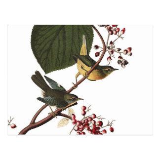 Cartão Postal A toutinegra extra de Audubon
