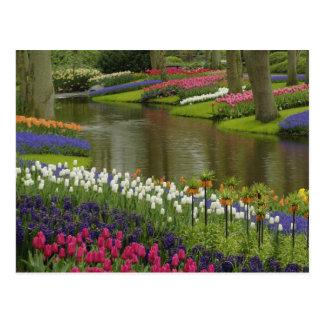 Cartão Postal A tulipa e o jacinto jardinam, os jardins de