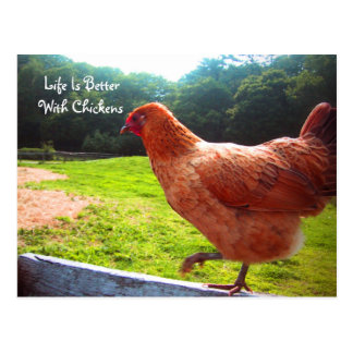 Cartão Postal A vida é melhor com galinhas