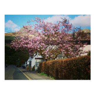 Cartão Postal A vila pequena de Glencoe, Scotland