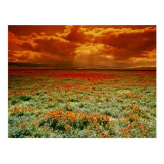 Cartão Postal Abandone o por do sol em um campo de papoilas de