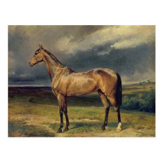 Cartão Postal Abdul Medschid o cavalo árabe da castanha, 1855