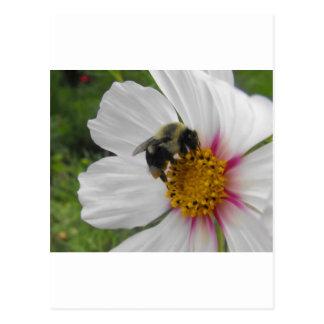 Cartão Postal Abelha da glória