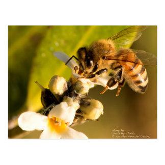 Cartão Postal Abelha do mel na flor dos manguezais