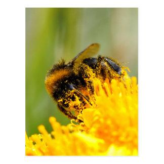 Cartão Postal Abelha e pólen do mel