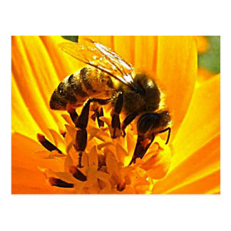 Cartão Postal Abelha em uma flor