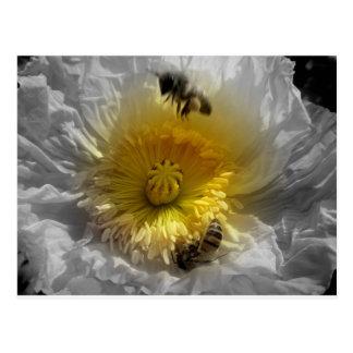 Cartão Postal Abelhas do mel e papoila branca