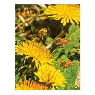 Cartão Postal Abelhas do mel que voam em torno dos