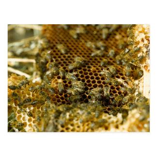 Cartão Postal Abelhas na colmeia, cabo ocidental, África do Sul