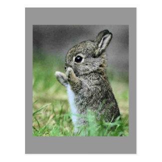Cartão Postal Abraço de coelho do amor