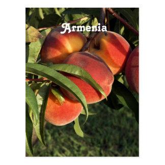Cartão Postal Abricós arménios