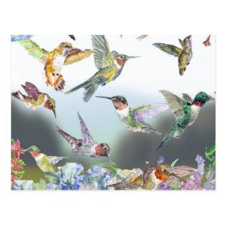 Cartão Postal Abrigo do colibri