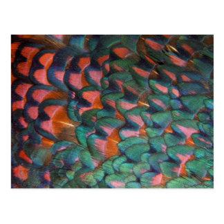 Cartão Postal Abstrato colorido das penas do faisão