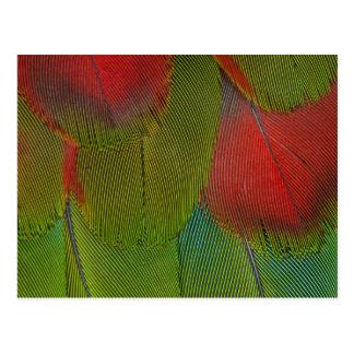 Cartão Postal Abstrato da pena do Macaw do Harlequin