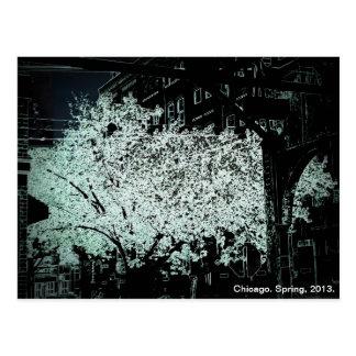 Cartão Postal Abstrato das flores de Chicago