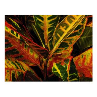 Cartão Postal Abstrato das folhas do Croton