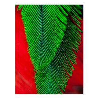 Cartão Postal Abstrato Resplendent da pena do quetzal