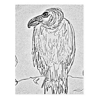 Cartão Postal abutre