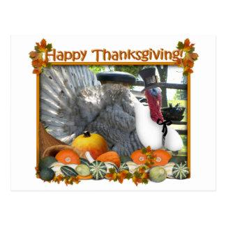 Cartão Postal Acção de graças feliz de Tom o peregrino Turquia