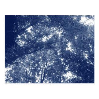 Cartão Postal Acima nas árvores - efeito de Cyanotype