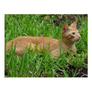 Cartão Postal adocica gato castanho