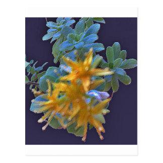 Cartão Postal Aeonium de florescência