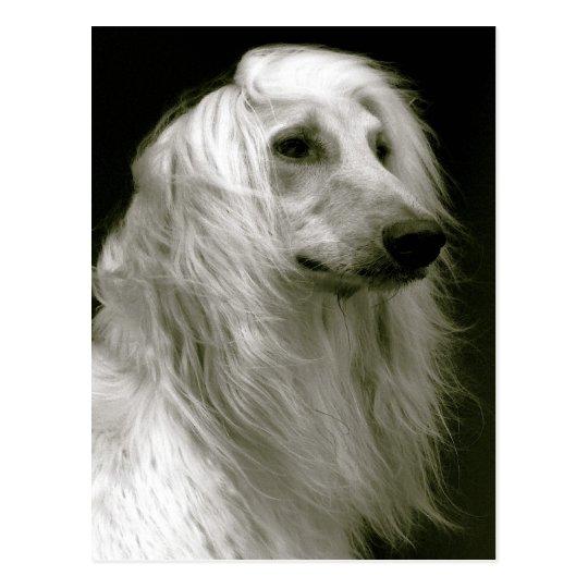 Cartão Postal Afghan hound
