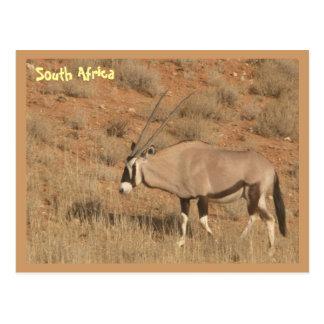 Cartão Postal África do Sul